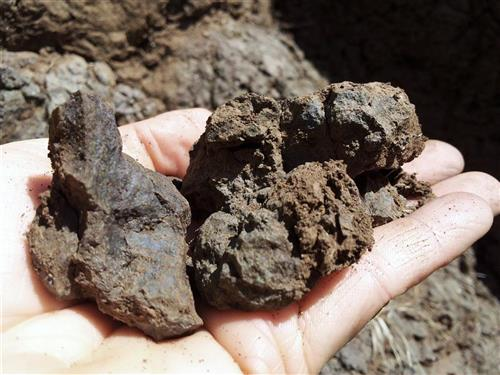 volcanic soil of Gambellara