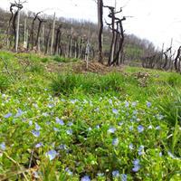 Primavera nella Tenuta Rivalonga
