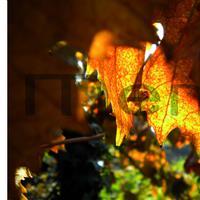 vine leaf: detail