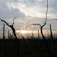 Sunset in Frigotto vineyards
