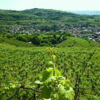 Gambellara town from Togo Rosso vineyards
